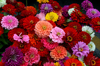 Color photograph of zinnias by Crystal Nederman
