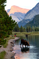 Color photograph of moose feeding on Swiftcurrent Lake by Crystal Nederman