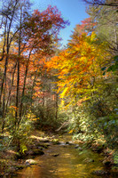 Fall colors come to the woods of the Smoky Mountain National Park by Crystal Nederman